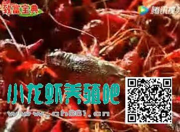 小龙虾养殖技术视频基础编【小白必须看】