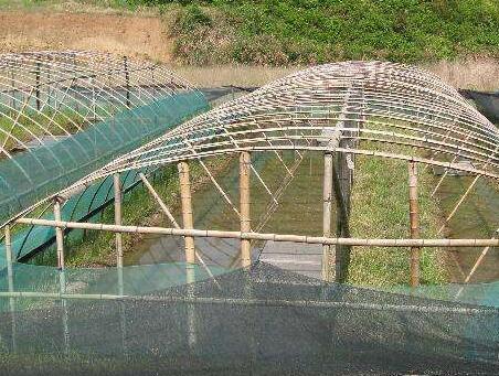 《致富经》淡水池塘龙虾养殖