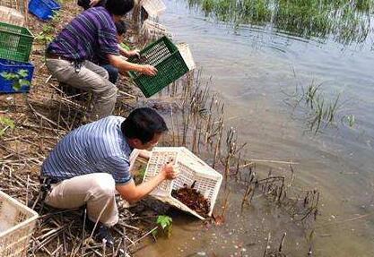 【曝光】如何让小龙虾高产