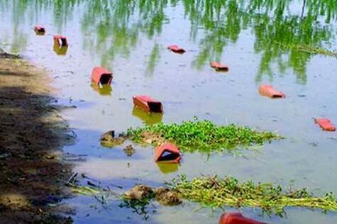 【宁红梅】池塘养殖小龙虾