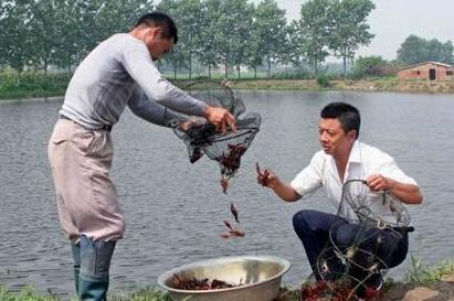 小龙虾幼虾放养前应注意什么