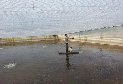 淡水小龙虾养殖之苗种繁育技术