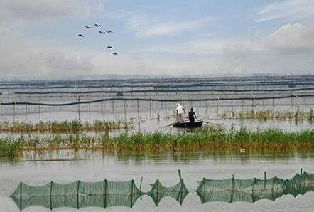 用水塘怎么养殖小龙虾?