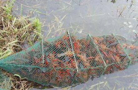 稻田养小龙虾需要办养殖证吗