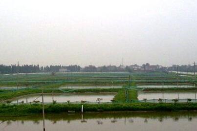 小龙虾稻田养殖成活率高吗?会不会破坏稻田和吃水稻?