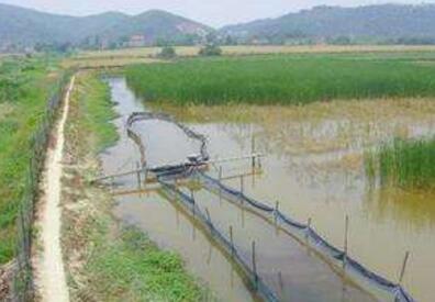 稻田小龙虾养殖的优势有哪些?