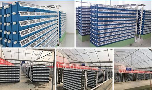 室内立体养殖小龙虾技术优势