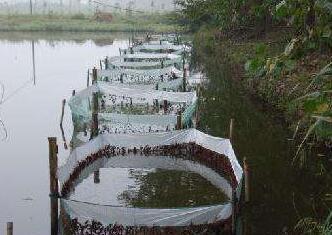 室内水泥池能养殖小龙虾吗?