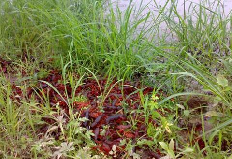 第一季小龙虾多久开始养