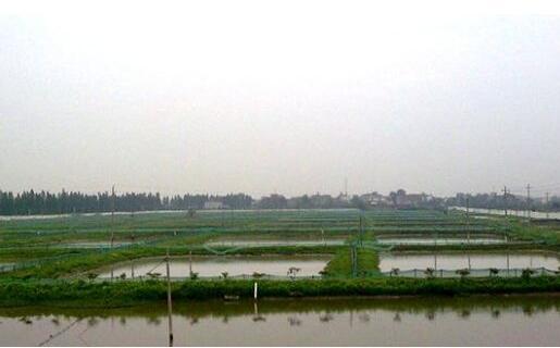小龙虾养殖需要什么水质