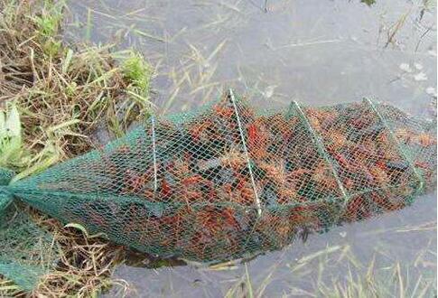 养十亩小龙虾一年能挣多少钱