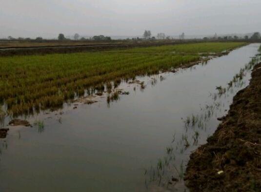 小龙虾稻田养殖和水塘养殖那个更好