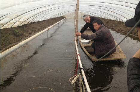 大棚可以养殖小龙虾吗有哪些要注意的?