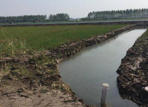 养殖小龙虾需要换水吗