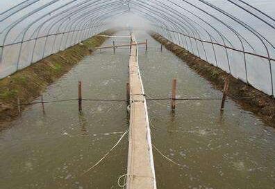 大棚水泥池冬天养龙虾可以吗?