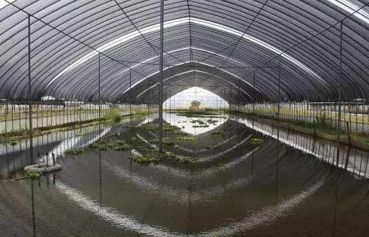小龙虾室内立体养殖有钱挣吗