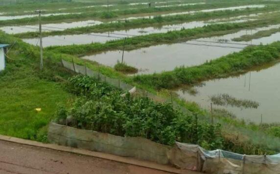 小龙虾适合在什么地方养殖?