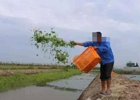 一亩地放养多少龙虾苗?