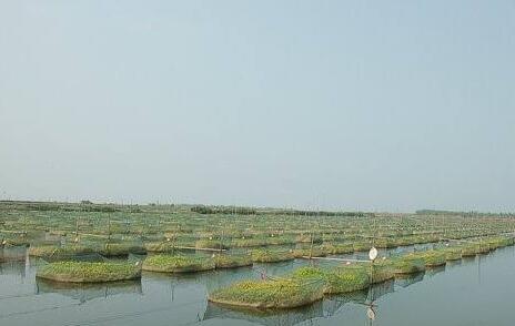 养殖小龙虾需要什么条件?
