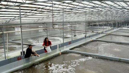 南美白对虾大棚温室养殖技术模式大全