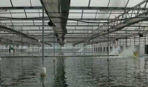 2019年南美白对虾工厂化养殖最新模式