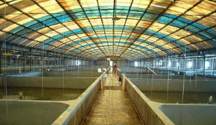 多少成本才能养殖对虾?