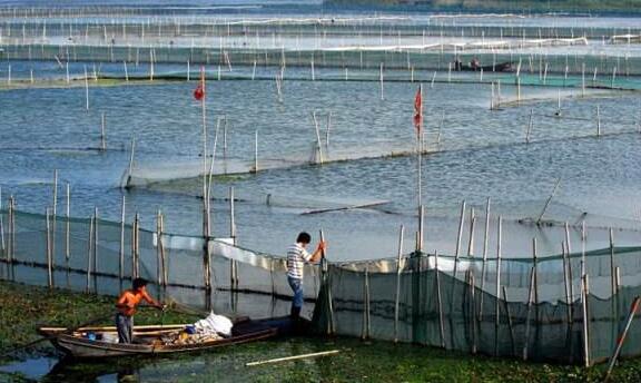 2020年青虾河虾养殖技术大全详解