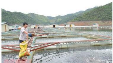 青虾网箱高产养殖技术方法