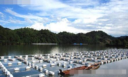 【青虾养殖亩利润多少】网箱养殖青虾产量有多少?