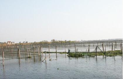 养殖青虾利润与成本分析