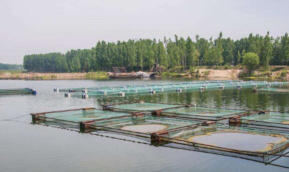 基围虾每亩养殖成本大概是多少?