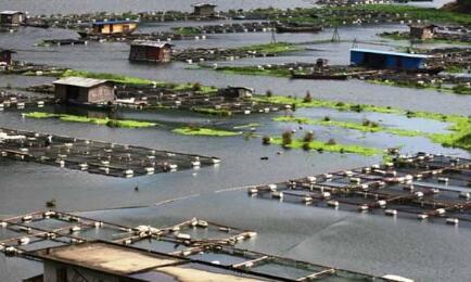 南通地区有养殖罗氏沼虾的吗?