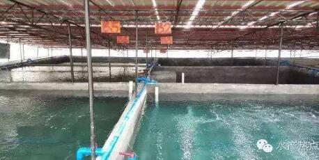 罗氏沼虾养殖每亩成本需要投入多少?