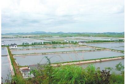 水库可以养殖小龙虾吗?