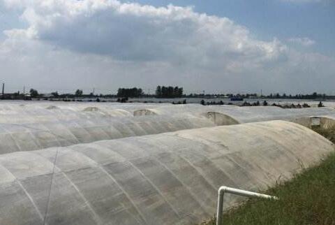 2019年南美白对虾养殖前景如何?