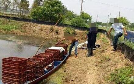 池塘养殖一亩小龙虾的成本多少?