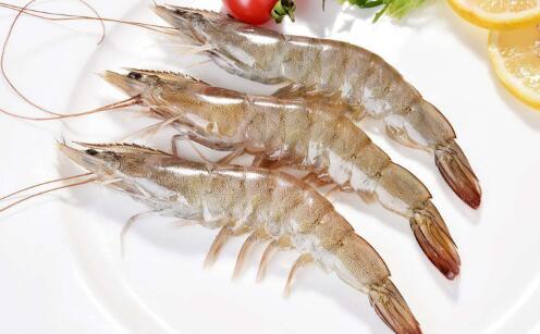 2019南美白对虾养殖成本与利润有多少?