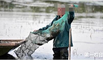 池塘捕捞小龙虾的方法有哪些?