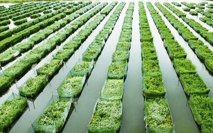 一亩地能养殖多少泥鳅合适?