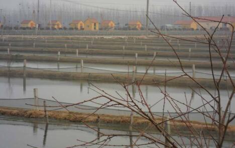 如何有效地提高泥鳅苗的成活率?