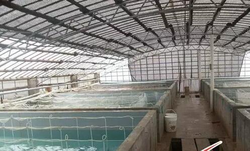 2020养殖罗氏沼虾前景市场行情怎么样?