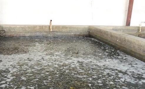 无土泥鳅养殖应该如何安全过冬?