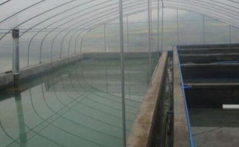 东北大棚可以养殖泥鳅?