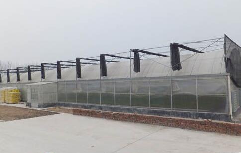 温室大棚养殖泥鳅的注意事项有哪些?