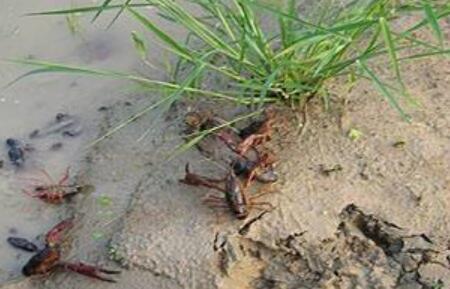 养殖20亩龙虾可赚多少钱一年