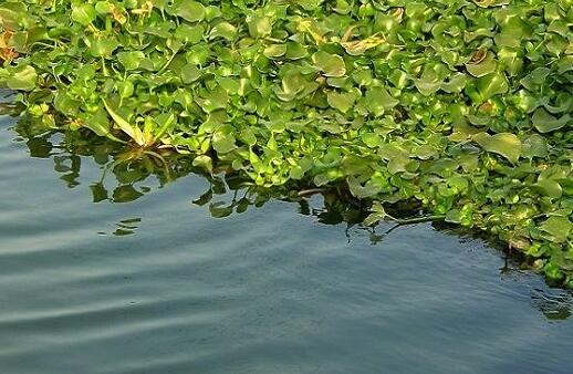 泥鳅的养殖技术都有哪些主流模式?
