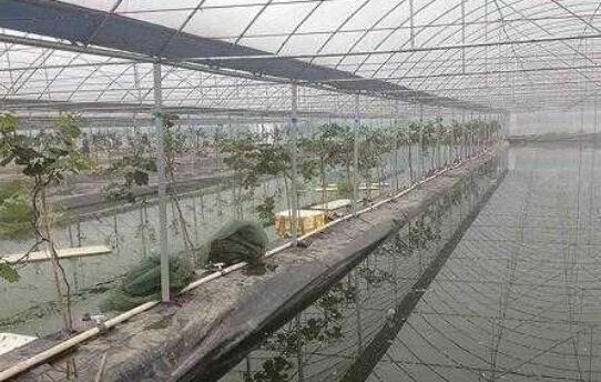 一亩泥鳅养殖成本大概多少合适?