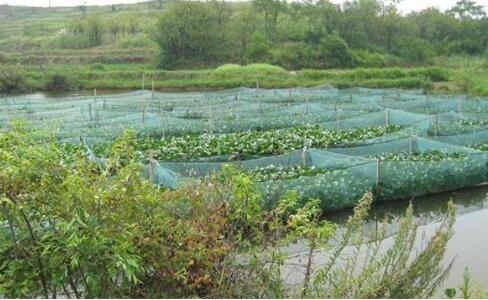 2020养殖黄鳝的利润和成本分别为多少?
