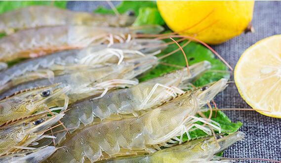 基围虾到底是什么虾和其他虾有什么不一样?