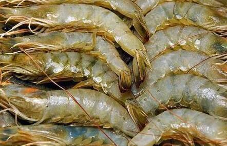 基围虾到底是不是发物吗?